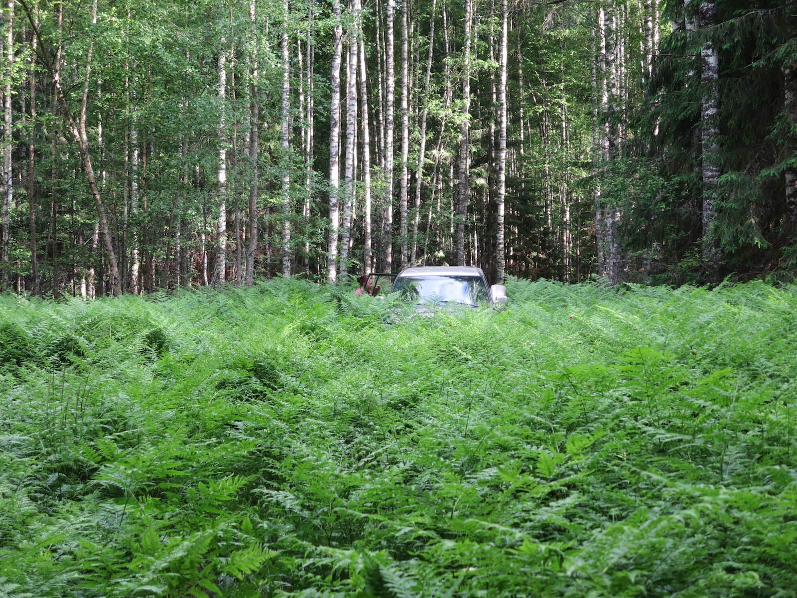 Fernforest with car Belarus