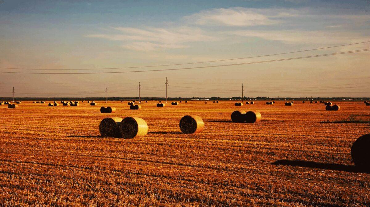 hay bales harvesting time Belarus