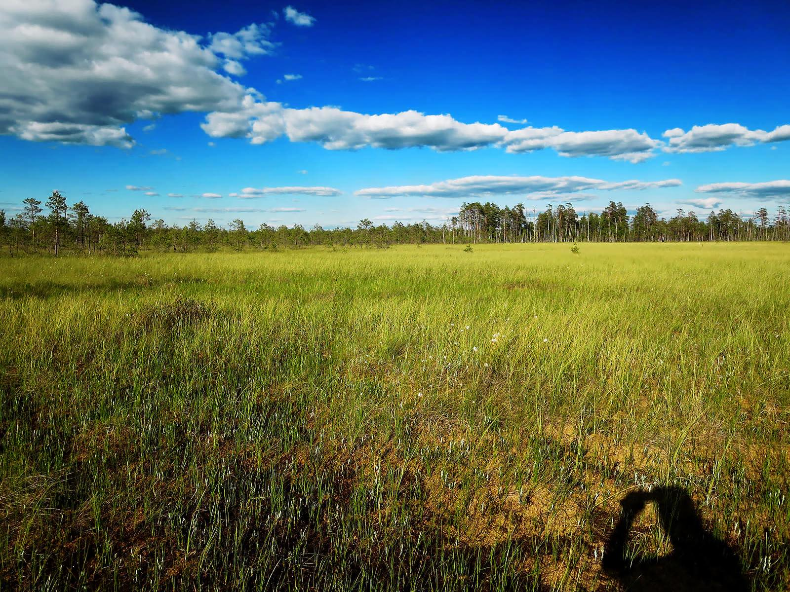 Summer meadow Belarus