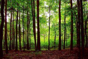 Forest Belarus