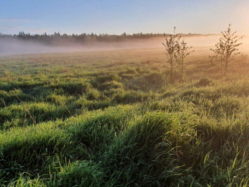 Morning fog in the field Belarus