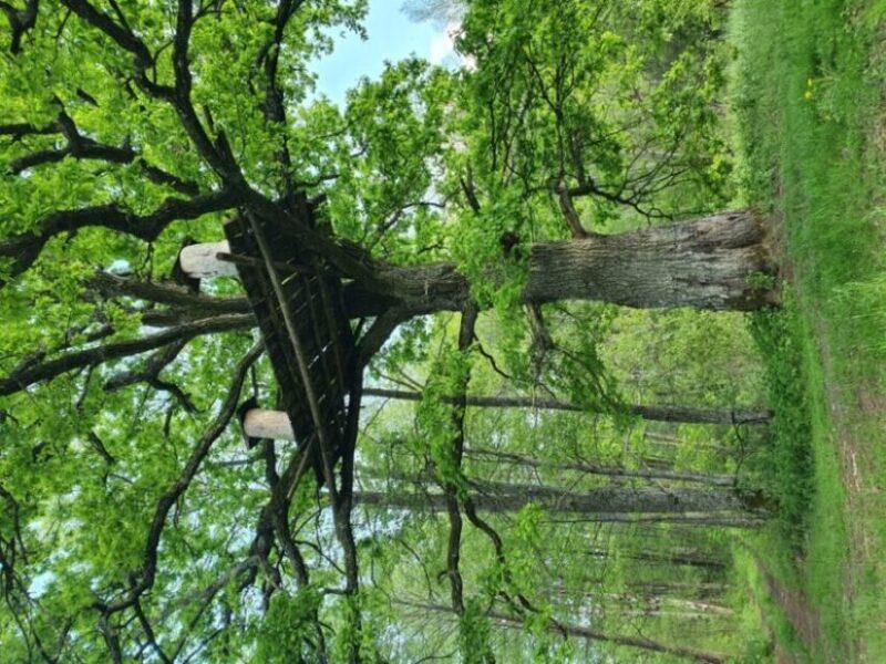 Naliboki forests. Tree beekeeping | Photo: Sveta Abehtikova