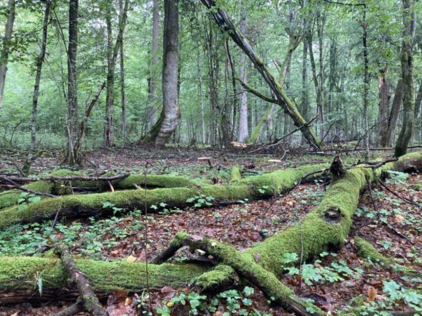 Białowieża National Park | Photo: Sveta Abehtikova